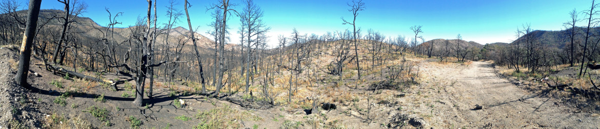 In areas where the Silver Fire burned hottest, such as this spot off Royal John Mine Road in the Black Range in the Gila National Forest, it decimated plant life.