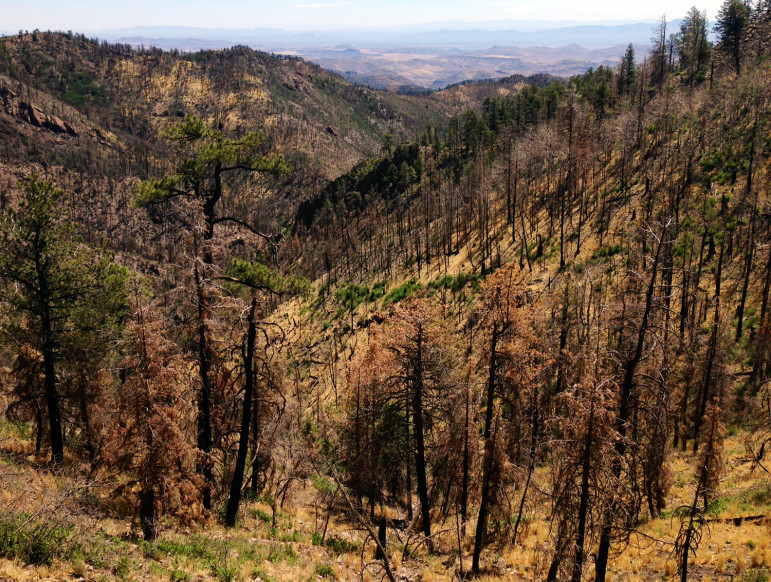 The landscape also looked different a year after the fire on the U.S. Forest Service trail to Hillsboro Peak.