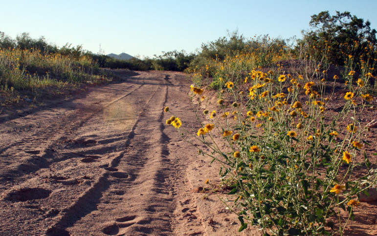 Wildflowers grow in the desert off Porter Drive and Pecan lane on the East Mesa. Somewhere in this stretch of desert, Freddie Ordoñez cremated his son's body after fatally injuring the child in 2004.