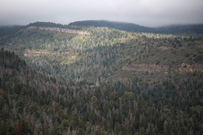 In central New Mexico's Sandia Mountains, there are more than 9,000 acres of dead conifers.