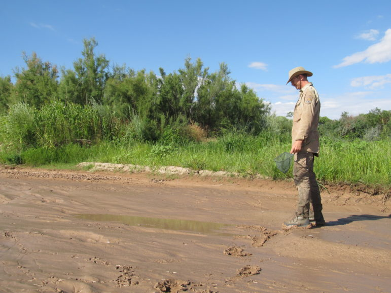In 2012, a US Fish and Wildlife Service biologist checks out a puddle near Los Lunas.