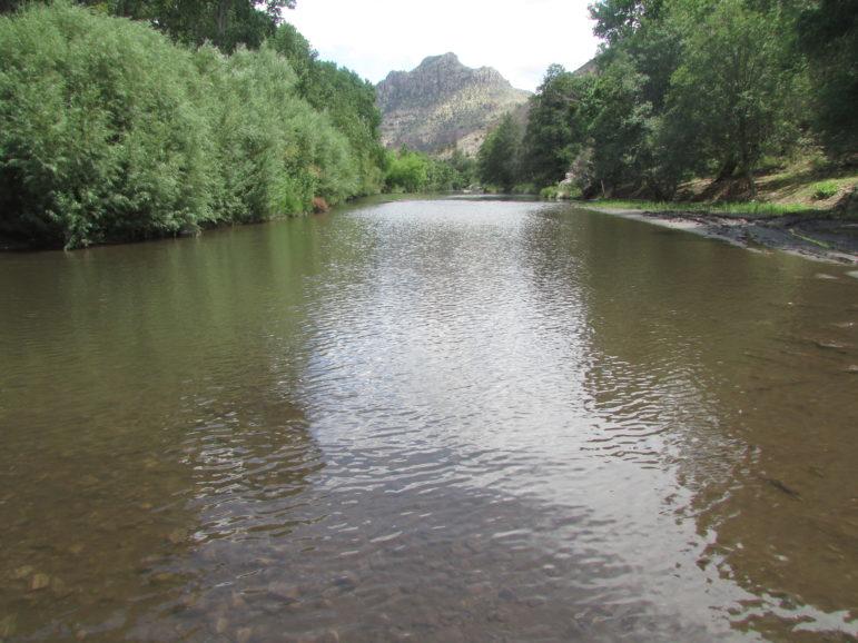 gila-7-22-14-img_1799-small-gila-near-turkey-creek